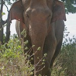 Elephant by Rainbirder
